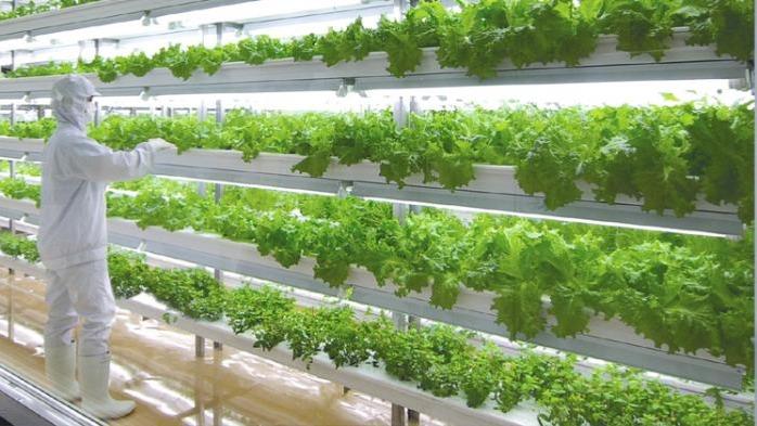 7e4a3bbd7472af87153aae07abe4d485 - Pentingnya Pertanian Modern untuk Keberhasilan Pembangunan Desa Terpencil